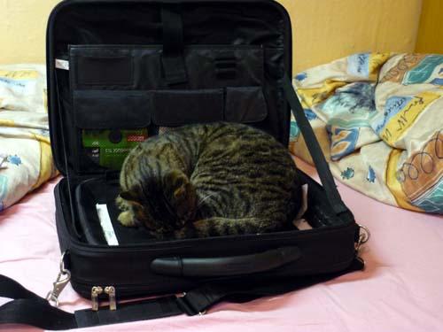 Katze in einer Laptoptasche